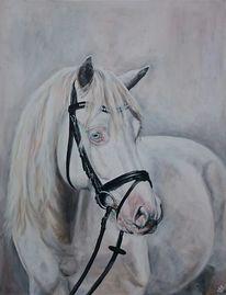 Weiß, Trensenzaum, Pferde, Lusitano