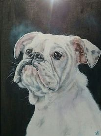 Bulldogge, Hund, Old english bulldog, Weiß