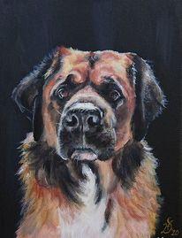 Hundekopf, Portrait, Hund, Moyo