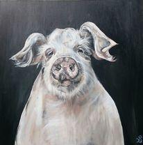 Portrait, Hausschwein, Rosa, Schwein