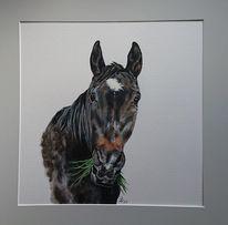 Pferde, Pferdekopf, Gras, Malerei