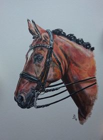 Portrait, Trense, Pferde, Malerei