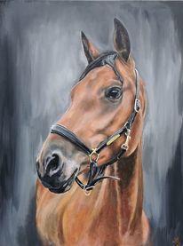 Lederhalfter, Pferde, Nüstern, Portrait