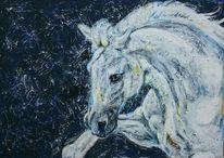 Schwarz weiß, Schimmel, Buckelndes pferd, Weisses pferd