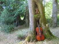 Wald, Natur, Cello, Baum