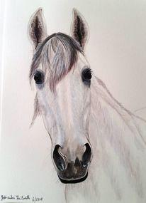 Pferde, Stute, Rosa, Zeichnungen