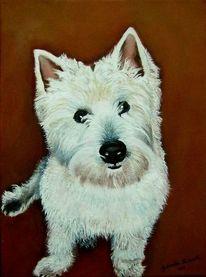 Hund, Westi, Weiß, Malerei