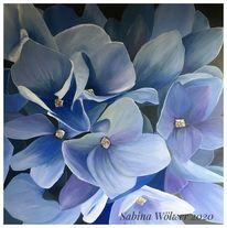 Lila, Hortensien, Blumen, Blau