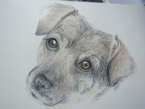 Mischlingshund, Buntstiftzeichnung, Zeichnungen,