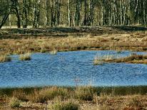Frühling, Moor, Tümpel, Fotografie