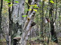 Wald, Herbst, Birken, Rüenberger