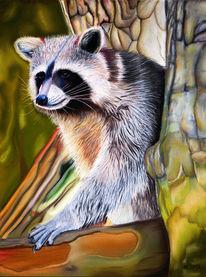Pastellmalerei, Waschbär, Wald, Tiere