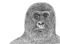 Schwarzweiß, Gorilla, Affe, Zeichnungen