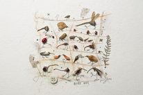 Fundstücke, Samen, Vogel, Pflanzen