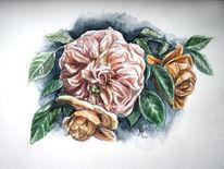 Rosenzeichnung, Rose, Natur, Rosenkäfer