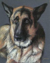 Zeichnung, Pastellmalerei, Portrait, Tiere