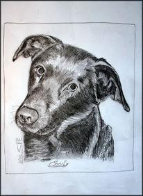 Hundeportrait, Hingabe, Labradormix, Bleistiftzeichnung