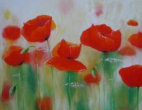 Blumen, Roter mohn, Wiese, Rot