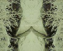 Spiegelung, Bearbeitung, Farben, Natur