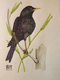 Singvogel, Vogel, Stern, Zeichnungen