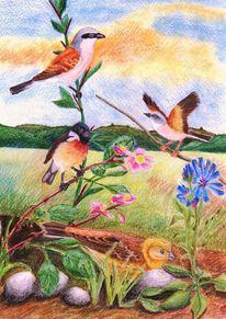 Singvogel, Schwarzkehlchen, Landschaft, Schwarzkelchen