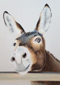 Malerei, Tierportrait, Esel, Tiere