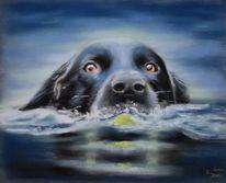 Pastellmalerei, Tierportrait, Hund, Tierzeichnung