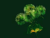 Stachelig, Diestel, Stachel, Blätter