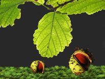 Fleck, Herbst, Blätter, Kastanien