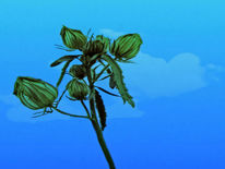 Blätter, Knospe, Stängel, Himmel