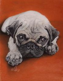 Tiere, Mops, Hund, Zeichnungen