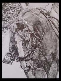 Porträtmalerei, Pferde, Bleistiftzeichnung, Zeichnung