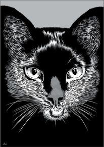 Katze, Schwarz, Illustrationen