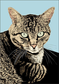 Augen, Katze, Illustrationen,