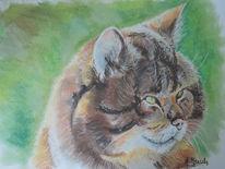 Wildkatze, Tierportrait, Kater, Zeichnungen