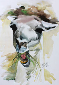 Aquarell, Tiere, Lama