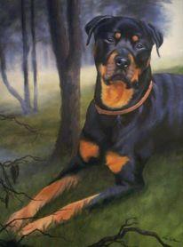 Hund, Tiere, Rottweiler, Haustier
