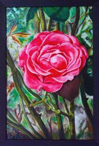 Rot, Stachel, Blüte, Rose