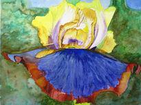 Blüte, Blumen, Iris, Frühling