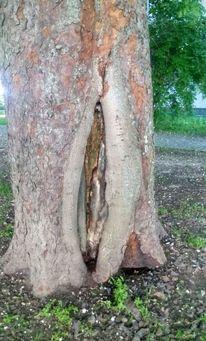 Natur, Bildung, Kastanienbaum, Fotografie