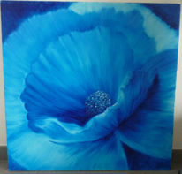 Blau, Blüte, Mohn, Makro