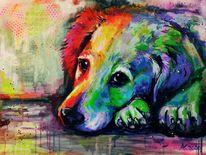 Regenbogen, Expressionismus, Freund, Hund