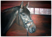 Realismus, Pferde, Licht, Schatten portrait