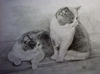 Katze, Tiere, Haustier, Grau