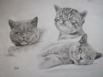 Tiere, Katze, Collage, Haustier