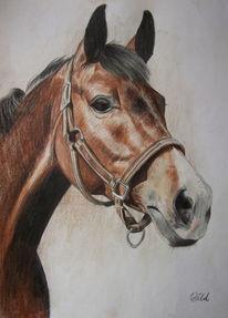 Pferde, Wallach, Pferdekopf, Zeichnung