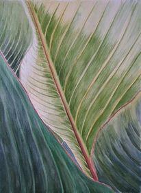 Blätter, Pflanzen, Grün, Canna