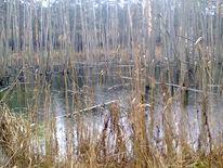 Sumpf, Schilf, Wasser, Baum