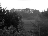 Schwarz weiß, Grau, Baum, Regen