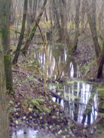 Baum, Wald, Wasser, Bach